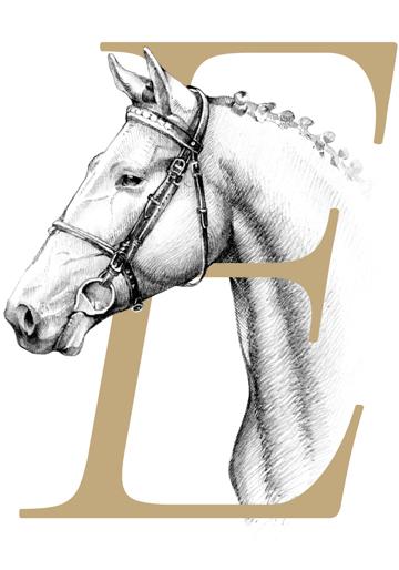 Eladó lovak